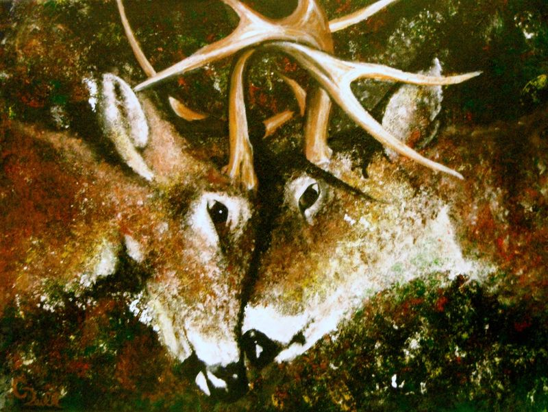 The clash, whitetail bucks fighting painting